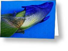 Iris On Blue Greeting Card