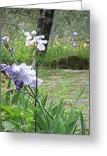 Iris On The Path Greeting Card