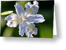 Iris Pacifica Greeting Card