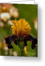 Iris Pictures 149 Greeting Card