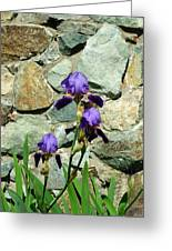 Iris Portrait Greeting Card