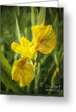 Iris Pseudacorus Yellow Flag Iris Greeting Card