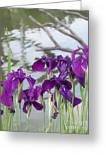 Iris Purple Lavender Greeting Card