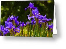 Iris Radiance Greeting Card