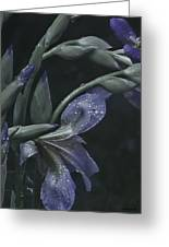 Iris Rain Greeting Card