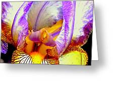 Iris Up Close And Personal Macro Greeting Card