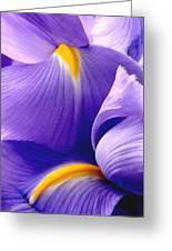 Iris Vi Greeting Card