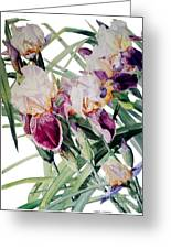 Watercolor Of Tall Bearded Irises I Call Iris Vivaldi Spring Greeting Card