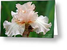 Iris With Dewdrops Greeting Card