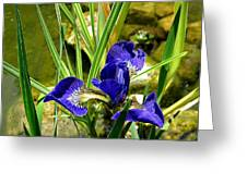 Iris With Frog Greeting Card
