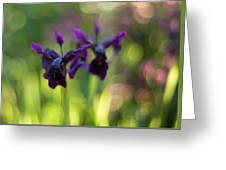 Irises Depth Greeting Card