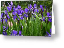 Irises In Spring Greeting Card