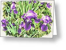 Irises In The Garden Greeting Card