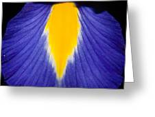 Irresistible Iris Greeting Card