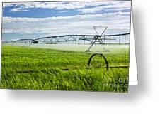 Irrigation On Saskatchewan Farm Greeting Card by Elena Elisseeva