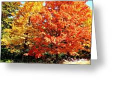 Is Autumn Already Greeting Card