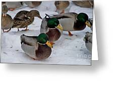Isabella's Ducks Greeting Card