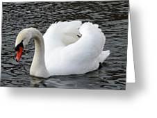 Isar Swan Greeting Card
