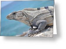 Isla Mujeres Iguana Greeting Card