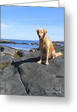 Island Dog Greeting Card