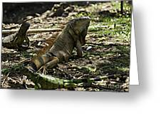 Island Lizards Four Greeting Card