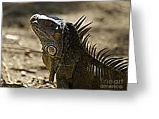 Island Lizards Three Greeting Card