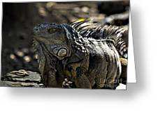 Island Lizards Two Greeting Card