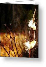 Island Park Cattail Greeting Card