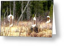 Island Park Cattails Greeting Card
