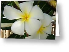 Island Plumeria Greeting Card