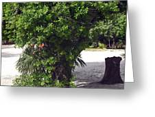Island Tree Greeting Card