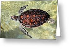 Island Turtle Greeting Card