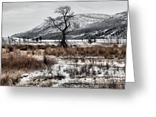 Isolation In Yellowstone Greeting Card