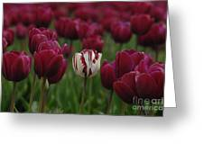 It Is Beautiful Being Different Greeting Card by Bob Christopher