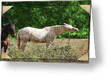 Itchy Horse Greeting Card