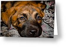 Its A Dogs Life Greeting Card by Ronny Sczruba