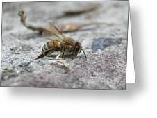 It's A Hard Life Little Bee Greeting Card