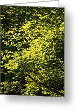 It's Autumn Time Greeting Card