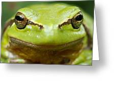 It's Not Easy Being Green _ Tree Frog Portrait Greeting Card by Roeselien Raimond