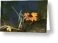 It's Over - Leafs On Pond Greeting Card