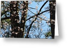 It's Spring 2013 Greeting Card