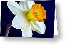 It's Spring - Square Greeting Card