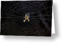 Itsy Bitsy Spider My Ass 2 Greeting Card by Steve Harrington