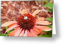 Itsy Bitsy Spider Walking On The Flower Greeting Card