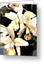 Ivory Cattleya Orchids Greeting Card