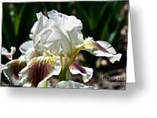 Ivory Sapphire Greeting Card