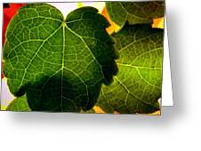 Ivy Light Greeting Card
