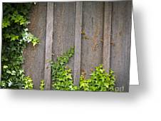 Ivy Wall Frame Greeting Card