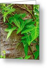Ivy Wrapped Tree Trunk Greeting Card