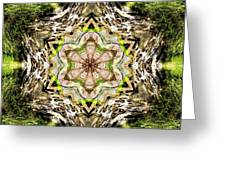 Jack In The Pulpit Mandala Greeting Card